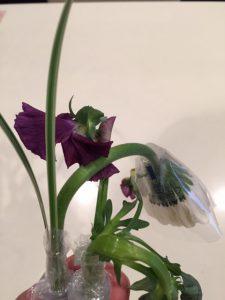 萎れたお花